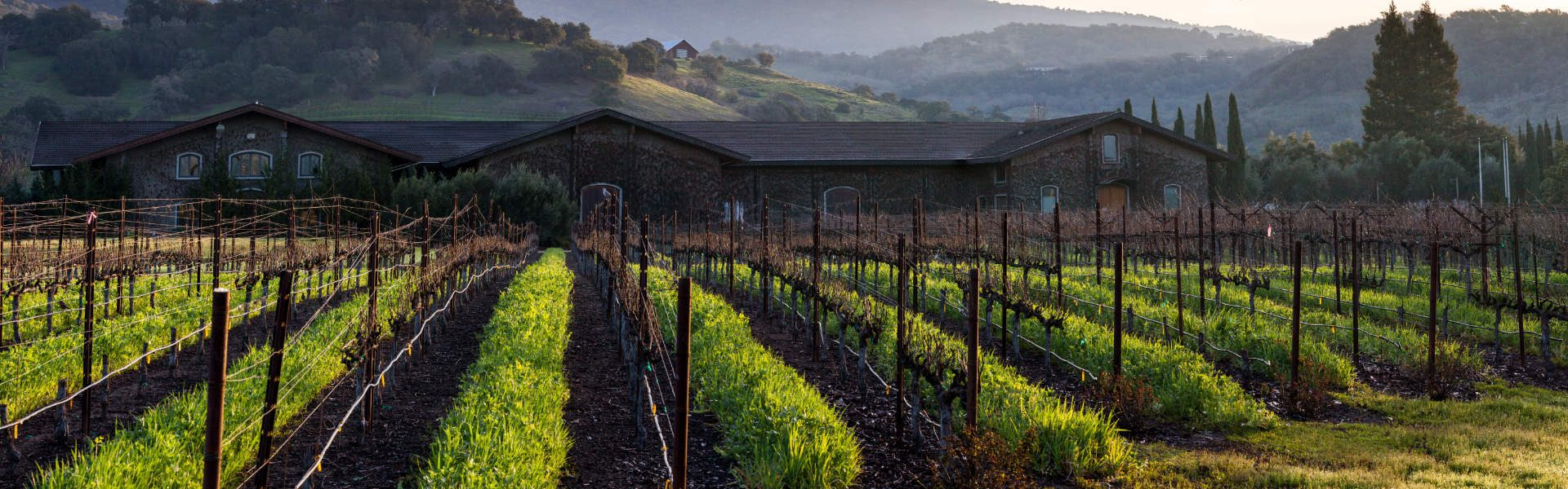napa - photo of the vine field